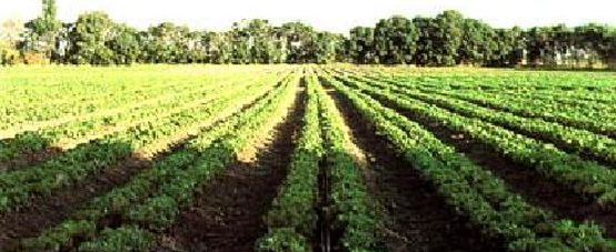 کشاورزی ارگانیک (زیستی)