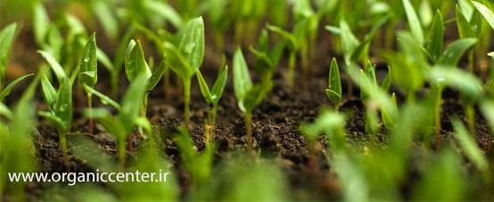 سلامت در تولید مواد غذایی