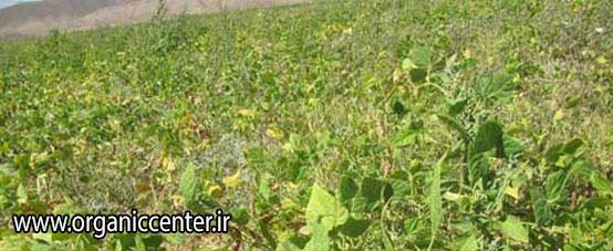 چهارمین مزرعه تحقیقاتی-تولیدی گوکرن