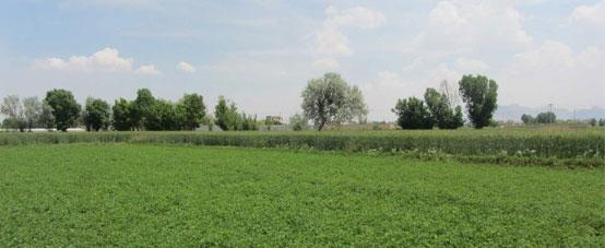 لزوم حرکت به سوی کشاورزی ارگانیک