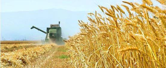 تولید محصولات سالم و ارگانیک