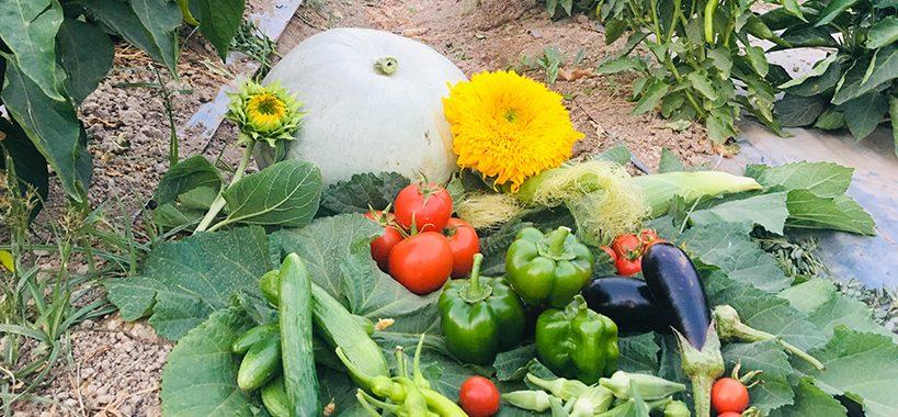 آیا مواد غذایی ارگانیک مغذی ترند؟